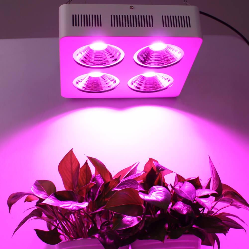 Đèn giúp cây quang hợp