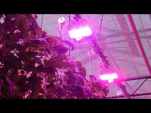 hướng dẫn trồng cây bằng đèn led