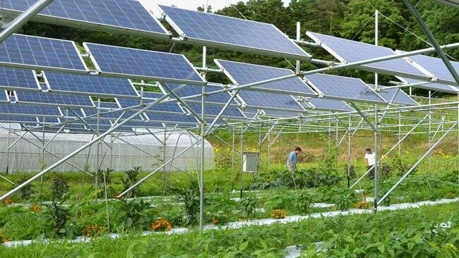 ứng dụng năng lượng mặt trời trong nông nghiệp