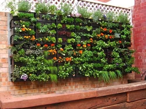 vườn đứng trồng rau