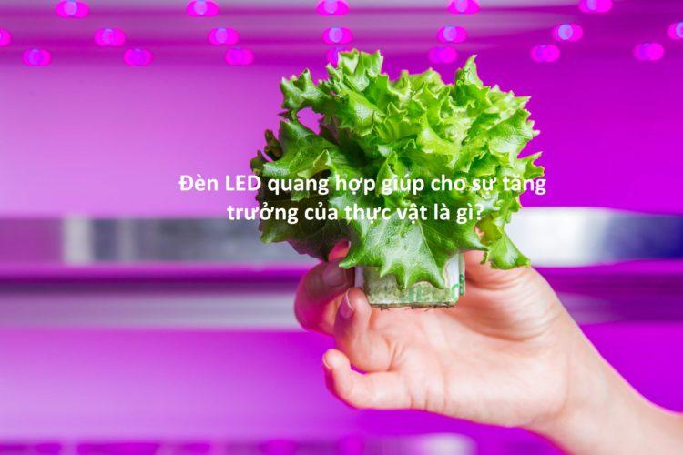 Đèn LED quang hợp giúp cho sự tăng trưởng của thực vật là gì?