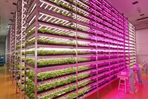 nhà kínhcanh tác cây trồng